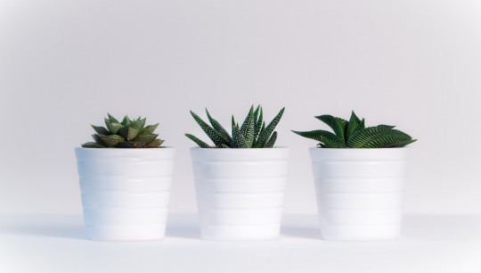 Indoor Plants for Air Quality | Improve Air Quality I Your Home