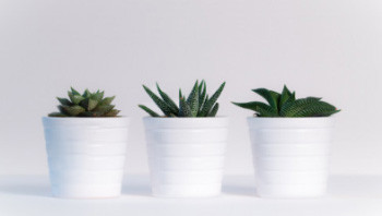 Plants to improve your home and clean your air